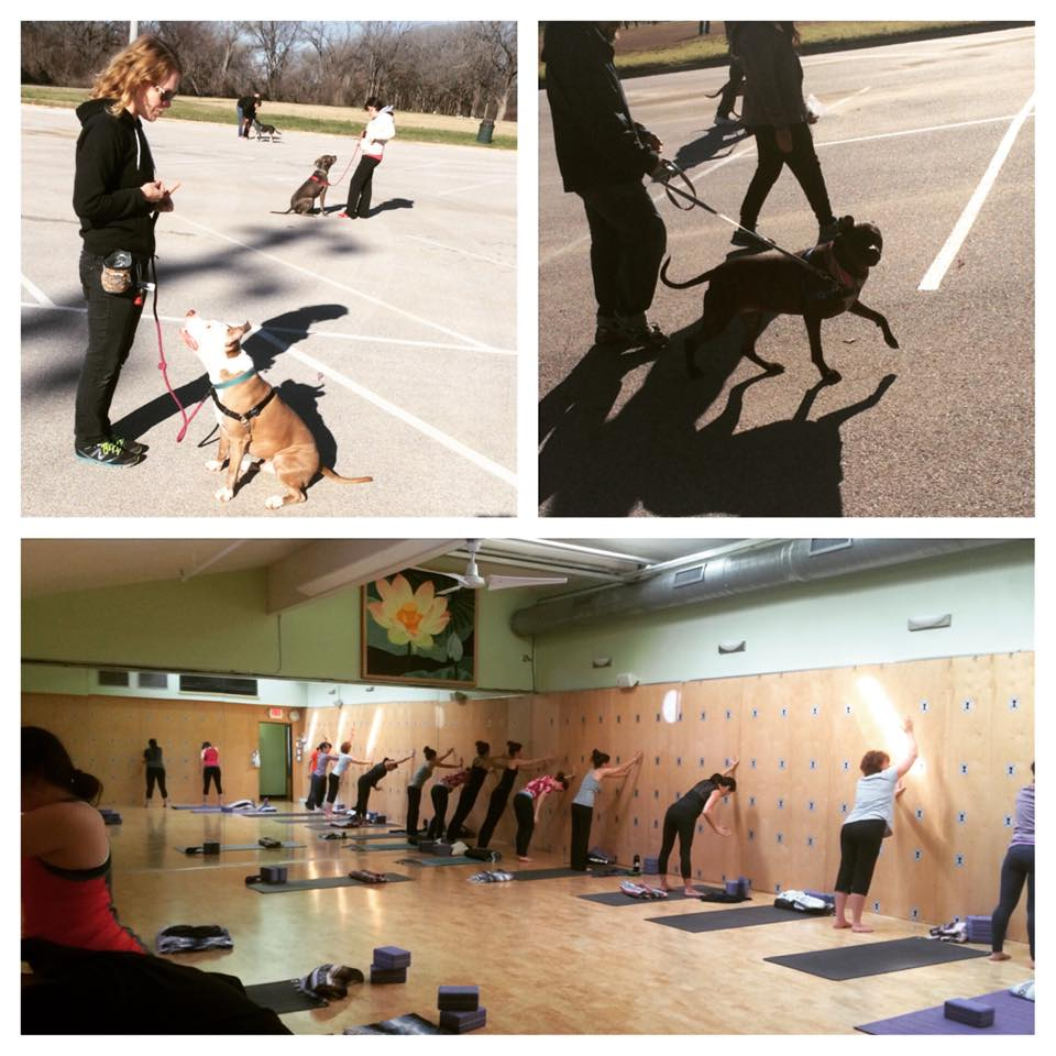 Dogs Out Loud Fundraiser Yoga Class