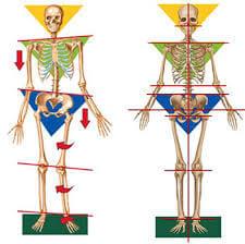 Skeleton Alignment