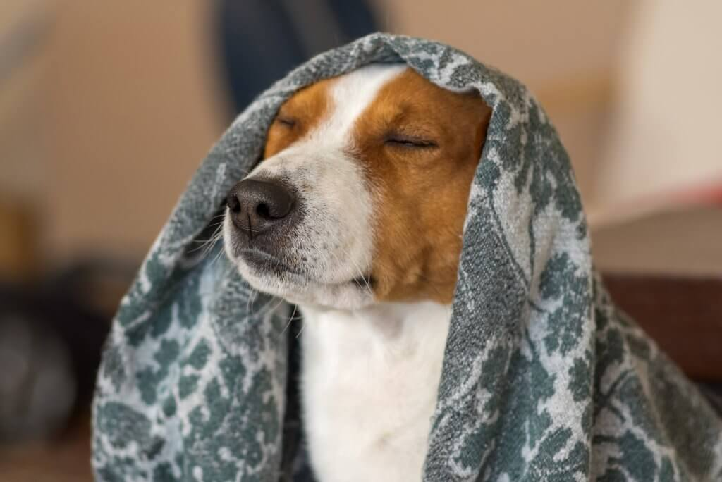 Stress Free Dog with closed eyes under blanket
