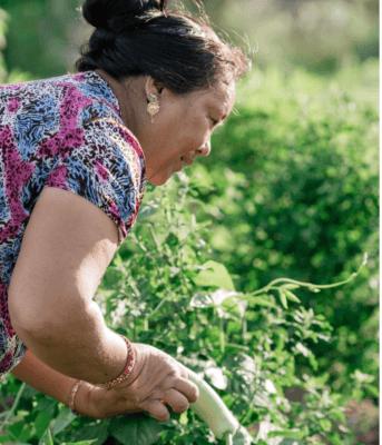 New Leaf CSA Farmer Picking Veggies
